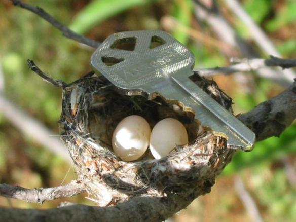 hummer eggs