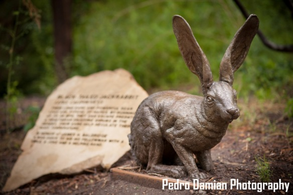 Sculpture Black-tailed Jackrabbit 2 WEB