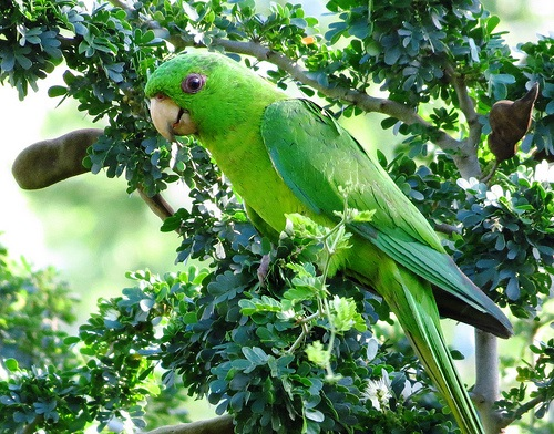 Green Parakeet Quinta Mazatlan John Brush