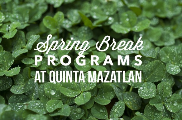 Spring Break programs at QM