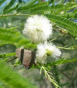 Spring-guajillo