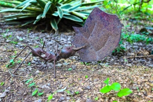 Leaf Cutter Ants 2 5-27-16