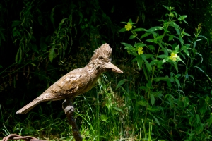 Green Kingfisher 123