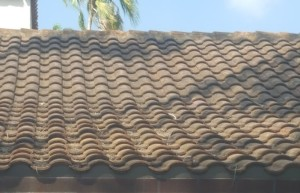 S shaped tiles